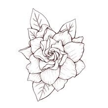 Elegant Gardenia Flower Graphi...