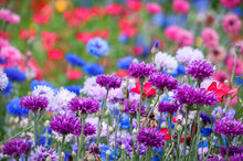 The Colorful Wildflowers