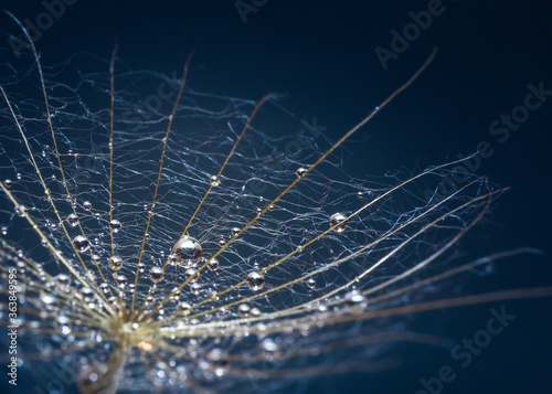 Image with dew drops. Wallpaper Mural