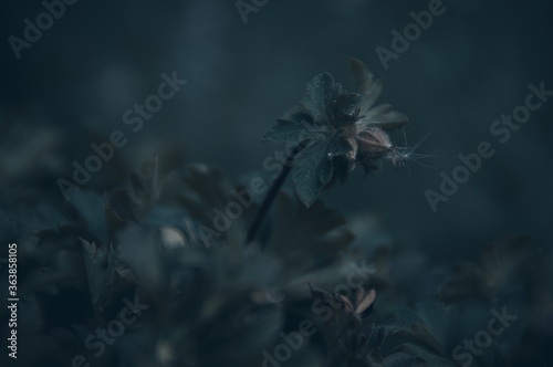 Fototapety, obrazy: Close-up Of Wilted Flower Against Blurred Background