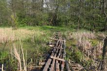 Wooden Bridge Across Bog In Fo...