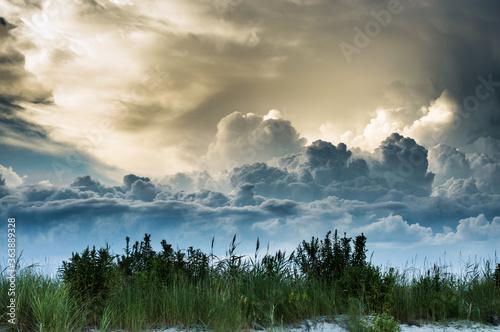 Carta da parati Panoramic Shot Of Trees Against Sky
