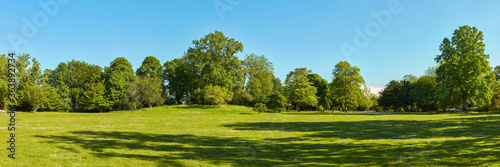 Green meadow in the park with trees and sky in summer - 363892734