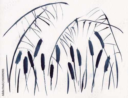 Fotografie, Obraz Watercolor painting with sedge & cattail grass