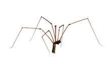 Araignée Sur Fond Blanc