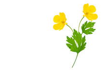Yellow Wildflowers Buttercup I...