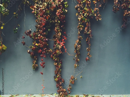 Close-up Of Creepers On The Wall Fotobehang
