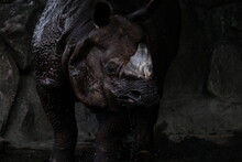 Close-up Of Rhinoceros Against...