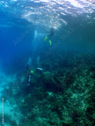 free diving underwater snrokel water blue caribbean sea Venezuela Wall mural