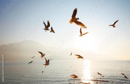 Fotografie, Tablou Birds Flying Above Sea