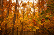 autumn leaves in the forest