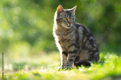 Obraz na płótnie Cat Sitting On A Field