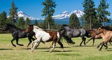 Galloping Horses And Three Sis...