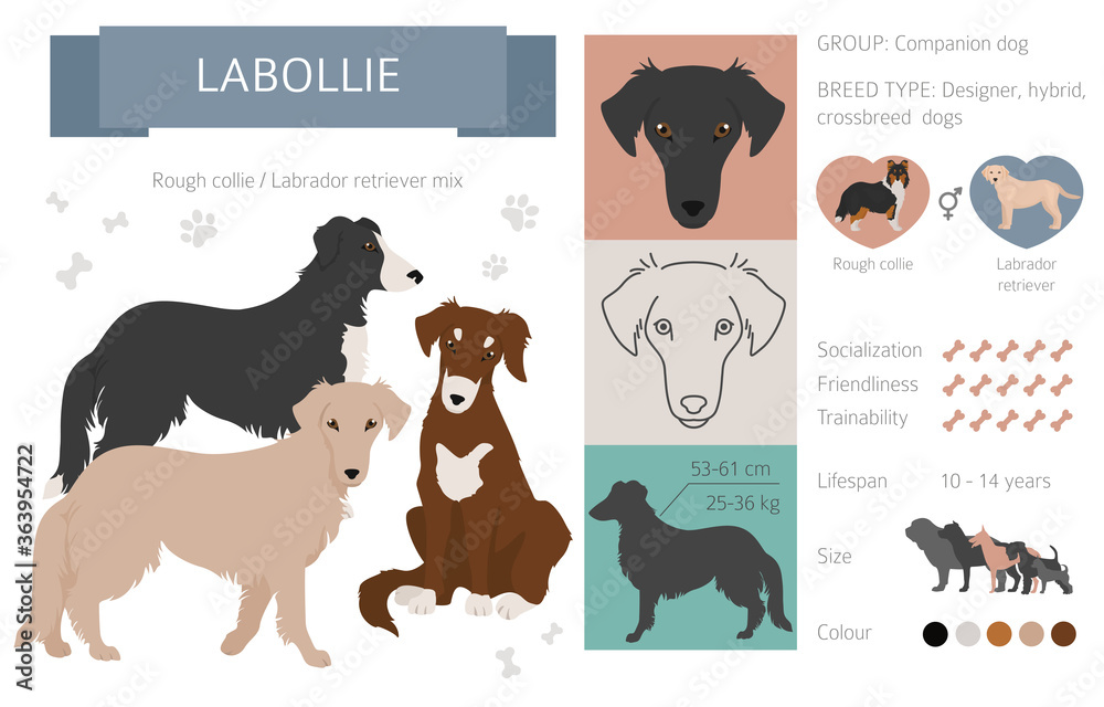 Fototapeta Designer dogs, crossbreed, hybrid mix pooches collection isolated on white. Labollie flat style clipart infographic