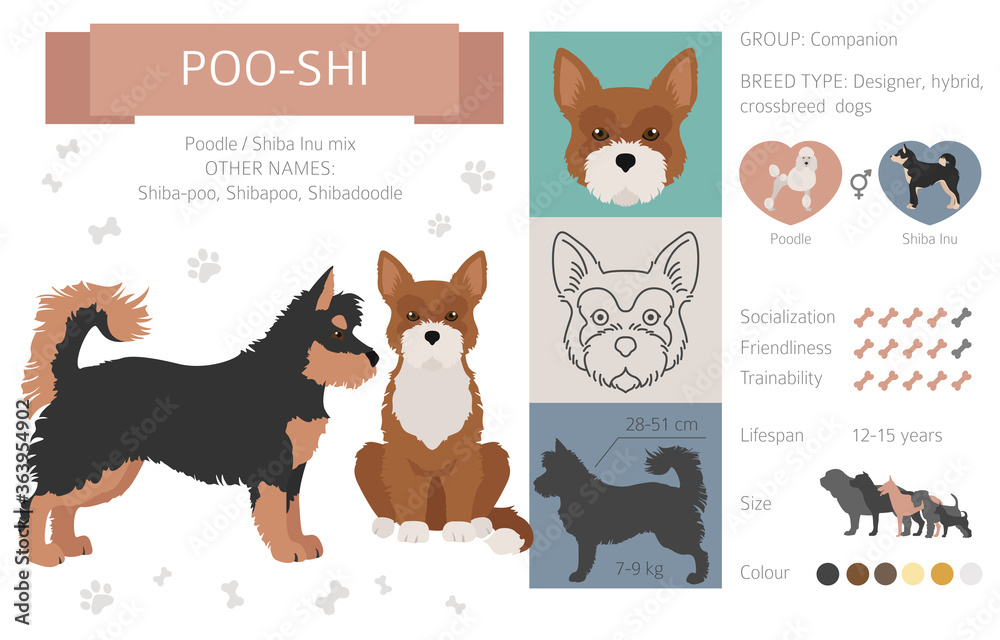 Fototapeta Designer dogs, crossbreed, hybrid mix pooches collection isolated on white. Poo-shi flat style clipart infographic