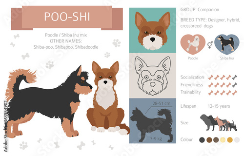 Fototapeta Designer dogs, crossbreed, hybrid mix pooches collection isolated on white. Poo-shi flat style clipart infographic obraz