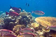 Fishes In Corals. Maldives. In...