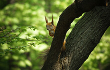 Beautiful Squirrel Peeps From ...