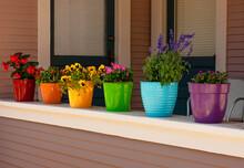SONY DSC  Flower Pots With Blo...