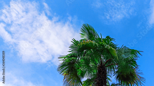 Beautiful palm tree against a bright blue sky Canvas Print