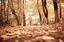 Autumn Park Sun Landscape / Se...