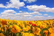Flock Of Migratory Birds Fly