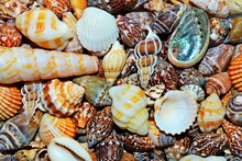 Seashells On Ocean Sea Beach P...