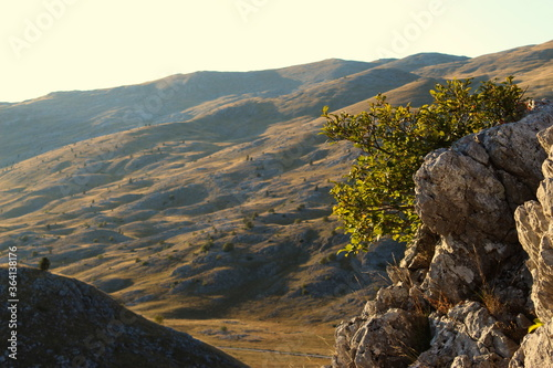 Fotomural Stones and tree, with the undulating landscape of the Bjelasnica mountain