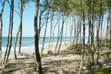 Fototapeta Fototapety z morzem do Twojej sypialni - Las, plaża, morze, Bałtyk