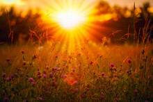 Orange And Warm Sunset And Glade. The Sun Rays Are Shining Through The Wildflowers.