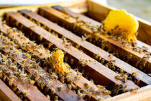 Frames Of Bee Hive With Honey ...