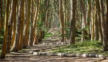 Beautiful Trail In Presidio, San Francisco, CA
