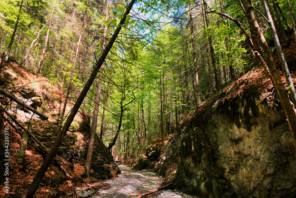 Fototapeta Path through slovak paradise. Slovensky Raj National Park, Slovakia. Forest trail landscape with beautiful sunlight.