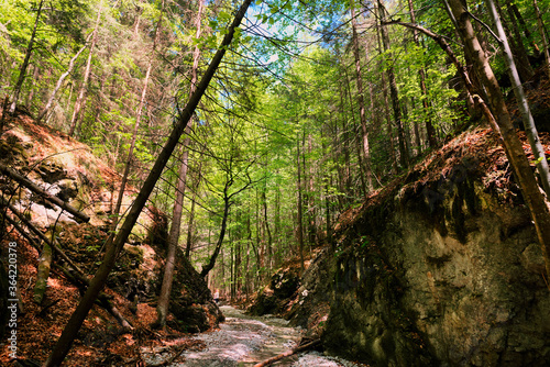 Obraz Path through slovak paradise. Slovensky Raj National Park, Slovakia. Forest trail landscape with beautiful sunlight. - fototapety do salonu