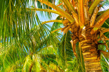 Fototapeta Do salonu Beach summer vacation holidays background with coconut palm trees and hanging palm tree leaves