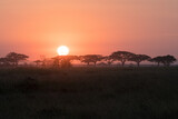 Fototapeta Londyn - Sunrise on the Serengeti