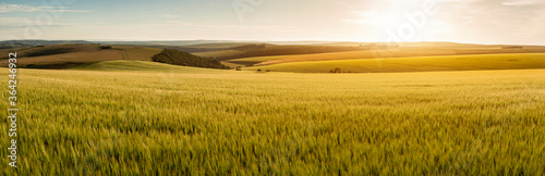 Fotografiet Stunning late Summer afternoon light over rolling hills in English countryside l