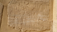 The Botanical Chamber, The Temple Of Karnak Hieroglyphic Of Exotic Plants And Birds On Wall