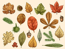 Hand Drawn Autumn Leaves. Colo...