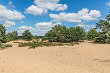 Zandverstuiving Op Het Rozenda...