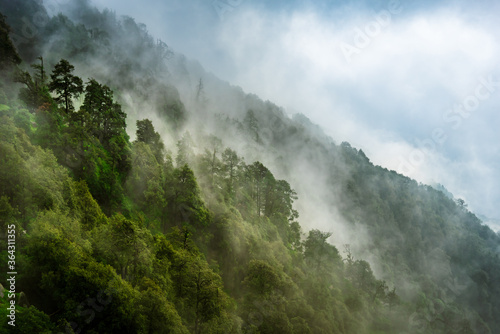 Fototapeta Forested mountain slope with the evergreen conifers shrouded in mist in a scenic landscape view at Mcleod ganj, Himachal Pradesh, India. obraz