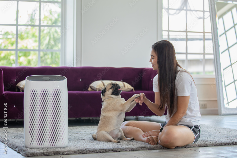 Fototapeta Woman playing with Dog Pug Breed and Air purifier in cozy white living room for filter and cleaning removing dust PM2.5 HEPA in home,for fresh air and healthy life,Air Pollution Concept