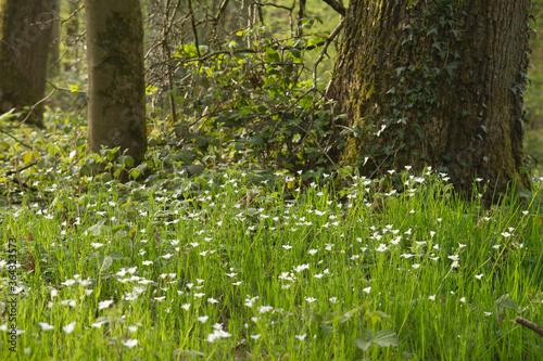 Fototapeta detail of woodland in spring obraz na płótnie