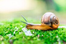 Snail And Moss