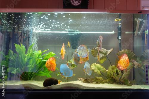 ryba, akwarium, woda, rybka, podwodne, charakter, morski, zwierzak, tropikalna, kwiat, bak, istnienie, zieleń, fantasy, pomarańcz, barwa, blękit, ilustracja, roślin, pływanie, paletki, dyskowce