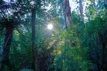 Shining Sun And Its Rays Penet...