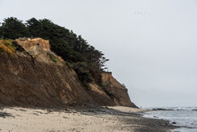 Fitzgerald Marine Reserve, A Beach Where Seals Are Resting In Some Seasons.