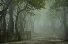 Beautiful Scenery Of Tree With...