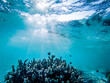 canvas print picture - underwater marine life on coral reefs