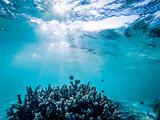 underwater marine life on coral reefs